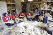 نوغانداریاشتغال پرسود خانوادگی در آذربایجان شرقی