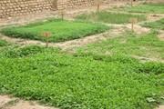 باغچههای سلامت در خرم بید اجرایی شد