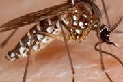 هجوم حشرات ناشناخته به خمین | سمپاشی شیمیایی فعلا به صلاح نیست