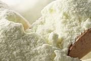 بازار شیر تو شیر دامداران | صادرات شیر خشک کلید بقای صنعت دامداری در روزگار کرونایی