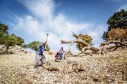 برخورد قاطع با تخریبکنندگان منابع طبیعی
