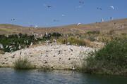 آبهای سد شهید کاظمی بوکان پذیرای هزاران قطعه پرنده مهاجر شده است