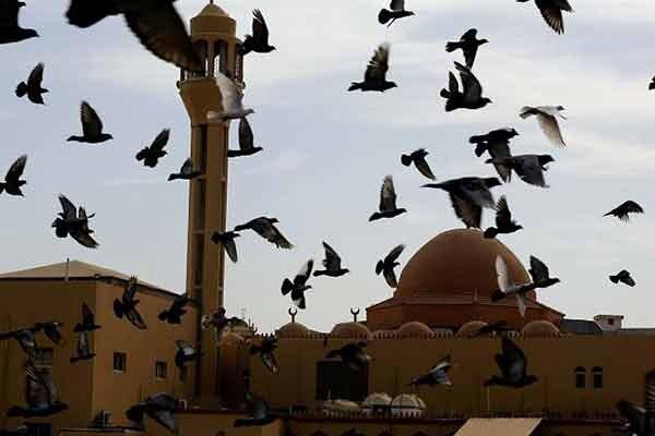 مسجد اهل سنت عربستان