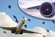 پرندگان مهاجر؛ عامل سقوط هواپیمای پاکستانی