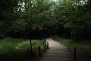 تصویر   روزهای خلوت جنگل النگدره