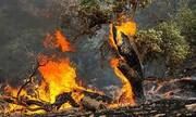 افزایش احتمال آتشسوزی در جنگلهای گلستان