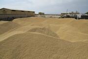 ۶ مرکز خرید گندم در بوکان راهاندازی شد
