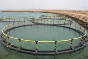 ارزآوری با صنعت آبزیپروری هرمزگان در روزگار تحریم