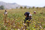 اولویت صنایع خراسان جنوبی، فراوری محصولات کشاورزی است