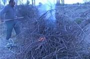 سوختن، سرنوشت درختان انگور در ملکان