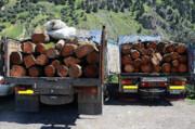 تشدید برخورد با قاچاق چوب در اردبیل