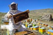 پیشبینی برداشت ۱۱۰۰ تن عسل در اشنویه