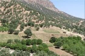 ذخیرهگاههای جنگلی استان کرمانشاه حفاظت میشوند