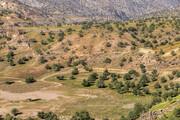 شناسایی ۳ ذخیرهگاه جنگلی در قزوین