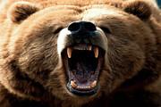 حمله خرس به یک طبیعتگرد در ارتفاعات روستای کلها