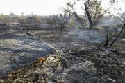 فیلم | حجم عظیم آتش در جنگلهای خائیز