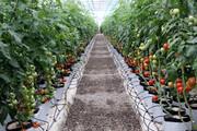 رشد هفت برابری کشت گلخانهای در خراسان شمالی