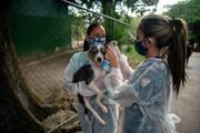 عکس روز| حیوانی برای دوران قرنطینه
