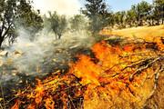 کابوس آتشسوزی در جنگلهای لرستان | شرایط بحرانی حریق  در ۵ شهرستان