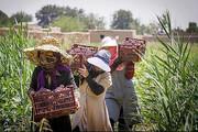گسترش حضور زنان روستایی در فعالیتهای کشاورزی