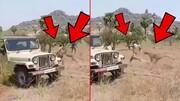 فیلم | لحظه وحشتناک حمله پلنگ به مامور جنگلبانی