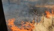 واکنش شوراییها به آتشسوزی بوستان ولایت و پارک چیتگر