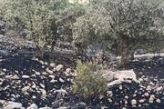 عاملان آتشسوزی جنگلهای خائیز دستگیر شدند