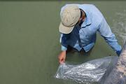 آغاز رهاسازی بچه ماهیان استخوانی در رودخانههای گلستان