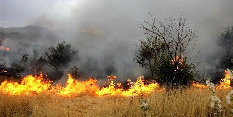 آتش سوزي در پارك