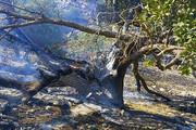 آتشسوزی جنگلهای جمهوری آذربایجان وارد ایران نشد