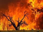 احتمال سرایت آتشسوزی مهیب جنگلهای جمهوری آذربایجان به جنگلهای گیلان