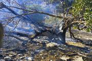 آتشسوزی و قاچاق چوب، نفس جنگلها را به شماره انداخت