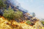 درختان منطقه گردشگری بوکان طعمه حریق شد