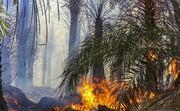 ۲۰۰ اصله درخت خرما در ریگانطعمه حریق شد