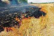 افزایش ۲ برابری آتشسوزی در مزارع ورامین
