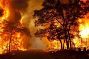 کارنامه جنگلهای ایران؛ ۱۷۰۸ آتشسوزی در ۶ روز