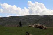خشکسالی چالش بزرگ عشایر و دامپروران البرزی