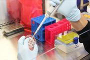 افزایش خفیف کرونا در گلستان | روزانه ۲۰ بیمار در استان بستری میشوند
