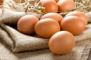 طرح ارتقای کیفیت تخممرغ اجرا میشود
