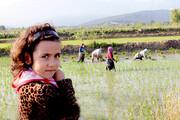 فیلم | نشاء طعم ایرانی در گلستان