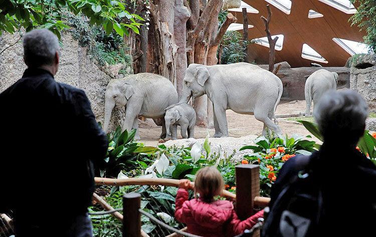فيلها در باغ وحش زوريخ