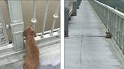 نماد وفاداری در ووهان | یک سگ چشمانتظار صاحبی که خودکشی کرد