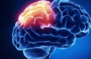 داروی ضدمالاریا به درمان سرطان مغز کمک میکند