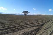 ثبت ملی درخت کهنسال ارس تخته مایان در طرقبه
