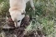 حیوانآزار سردشتی دستگیر شد