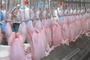 بیتوجهی به موازین شرعی ذبح در مراکز عرضه مرغ زنده