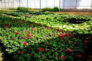دومین تولید کننده گل و گیاه کشور صاحب بازار دائمی شد