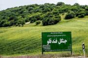 توسعه جنگلهای فندق استان اردبیل