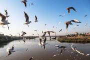 اخطار | مجازات برای نگهداری و شکار پرندگان