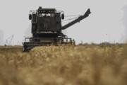 گندم کشاورزان خلخالی خریداری نشد